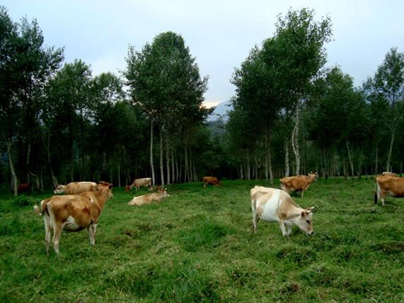 Ilites sembrados en 2005, con líneas de cerco electrico para protegerlos