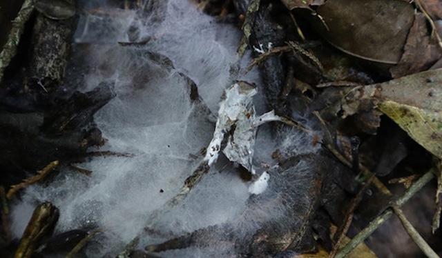 Micelio sobre suelo